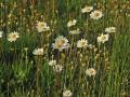 Kwiaty łąka